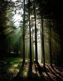 TreesMooswalk.jpg