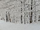winterwoods_1.jpg